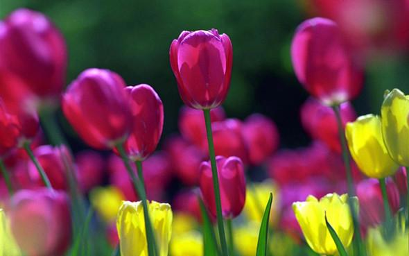 Весна идет! Создаем весеннее настроение. Изображение № 9.