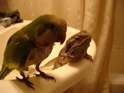 50 животных, которые ненавидят мыться. Изображение № 31.