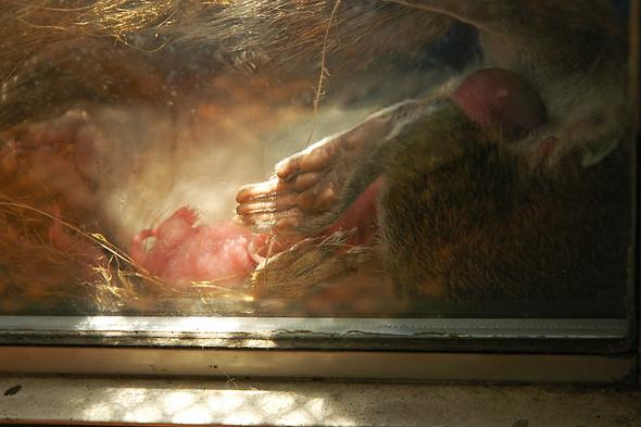 Белка в нашем окне. Изображение № 5.