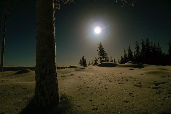 Изображение 4. Выходные в шведском лесу.. Изображение № 4.