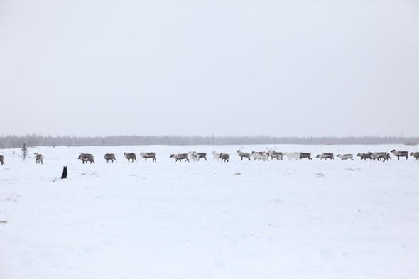 Путешествие на Север к ненцам. Изображение № 22.