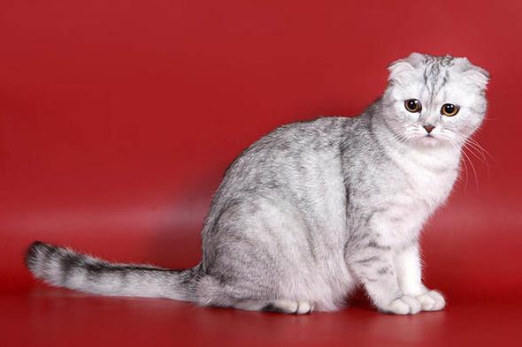 Кошки в интерьере. Изображение № 15.