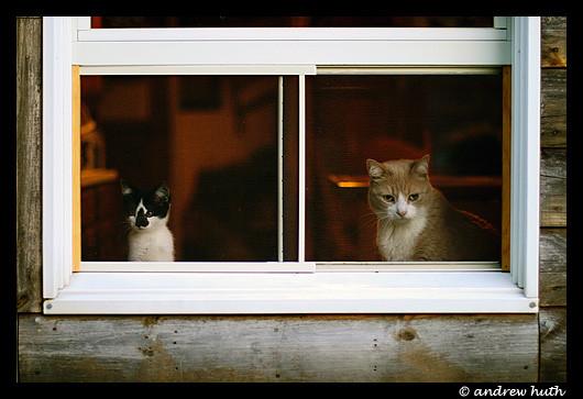 Cat. Window. Изображение № 1.