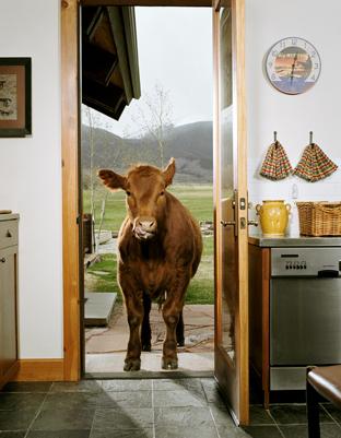 Животноводство отCatherine Ledner. Изображение № 12.
