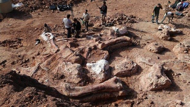 В Аргентине нашли останки крупнейшего динозавра Земли. Изображение № 2.