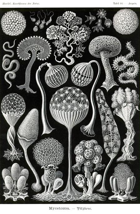 Причудливые формы природы. Изображение № 43.