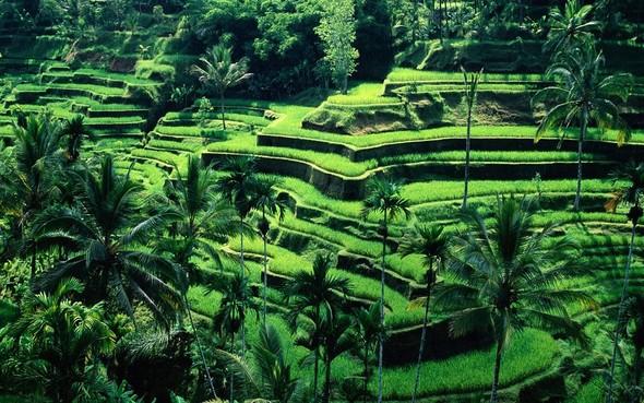 Bali Indonesia HD desktop High Definition Wallpaper 1920x1200 Hot HD Wallpaper