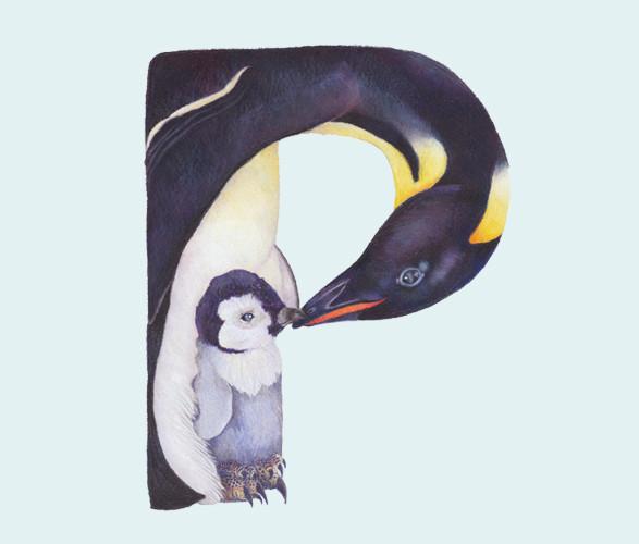 Животный алфавит. Изображение № 6.