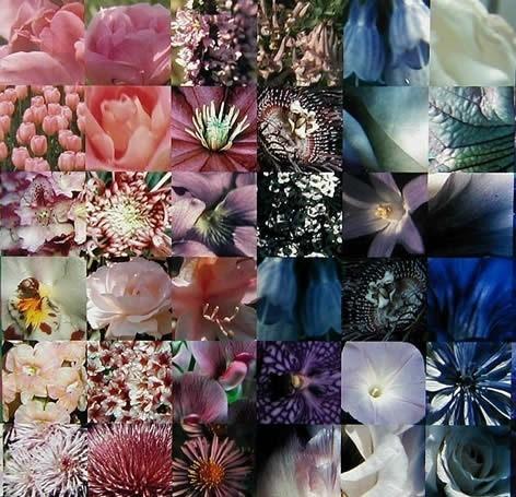 Photomosaic: аналитическое искусство. Изображение № 11.