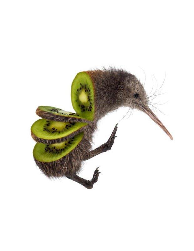 Концепт: животные в виде фруктов. Изображение № 7.