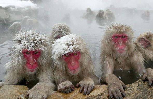 И даже обезьянам нужен отдых. Изображение № 17.