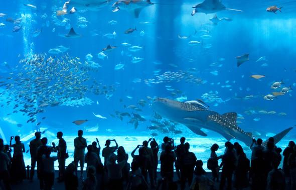 Изображение 3. Okinawa Churaumi Aquarium.. Изображение № 3.