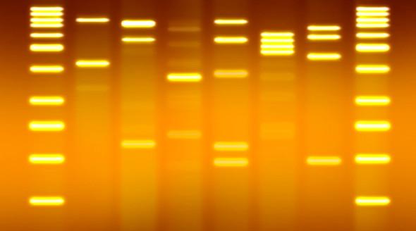 У вас красивая ДНК?. Изображение № 2.