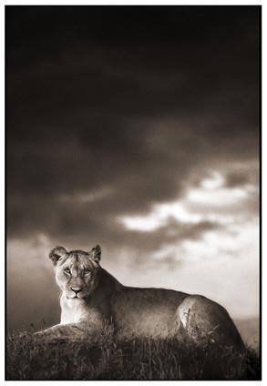 МояАфрика. Изображение № 21.