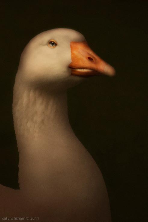 Келли Уитэм: красота по-новозеландски. Изображение № 2.