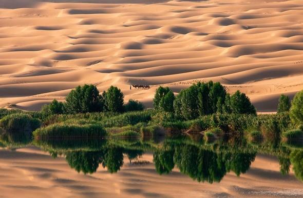 Фотоконкурс National Geographic 2010. Изображение № 29.