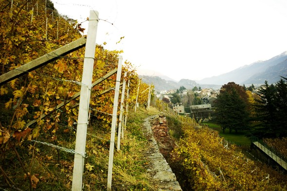 Горный виноград Nebbiolo. Изображение № 9.