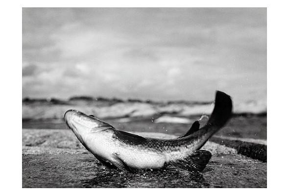 Фото-рыбалка Кори Арнольда. Изображение № 45.