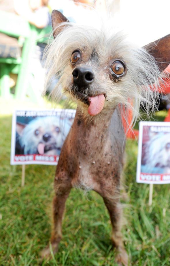 Умерла самая уродливая собака планеты. Изображение № 1.