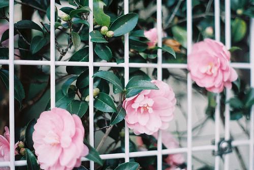Изображение 11. Никогда не надо слушать, что говорят цветы. Надо просто смотреть на них и дышать их ароматом... Изображение № 11.