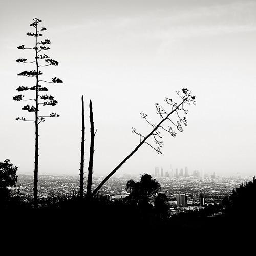 Пустынные пейзажи. Джозеф Хофленер. Изображение № 8.