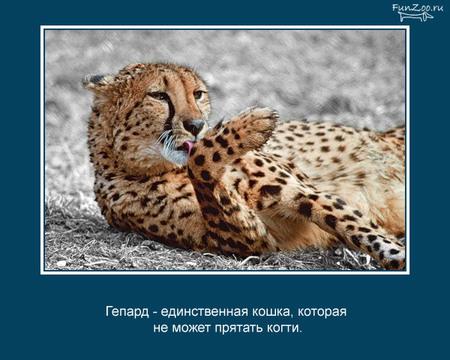 Животные иинтересные факты оних. Изображение № 5.