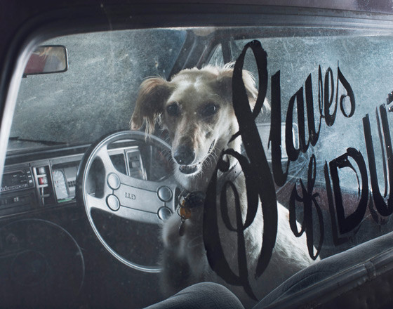 The silence of dogs in cars. Изображение № 8.