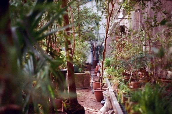Прогулка по Ботаническому саду. Изображение № 14.
