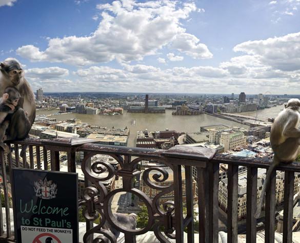 Будущее Лондона. Изображение № 11.