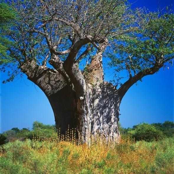 Ботсвана. Изображение № 20.