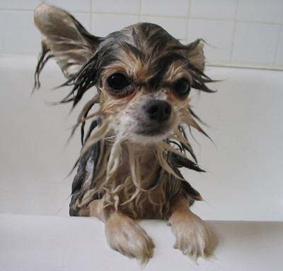 50 животных, которые ненавидят мыться. Изображение № 26.