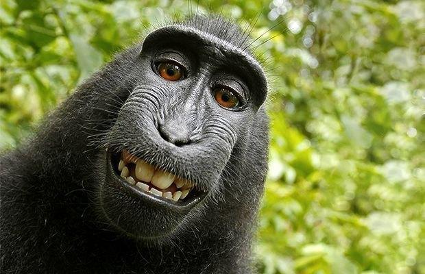 Есть ли у животных  чувство юмора?. Изображение № 2.