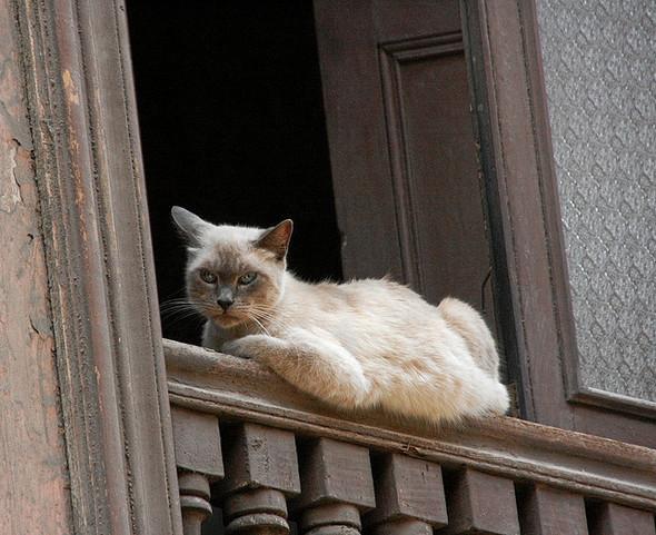 Cat. Window. Изображение № 30.