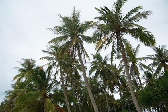 Я зимую на острове Фукуок. Вьетнам. Изображение № 18.