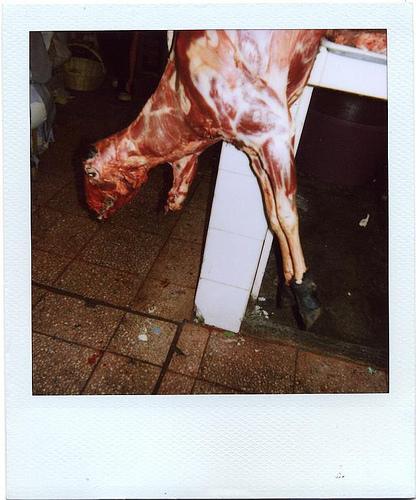 Animals Dead. Изображение № 8.
