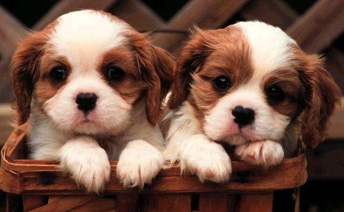 Puppy, puppy, 1-2-3!. Изображение № 4.