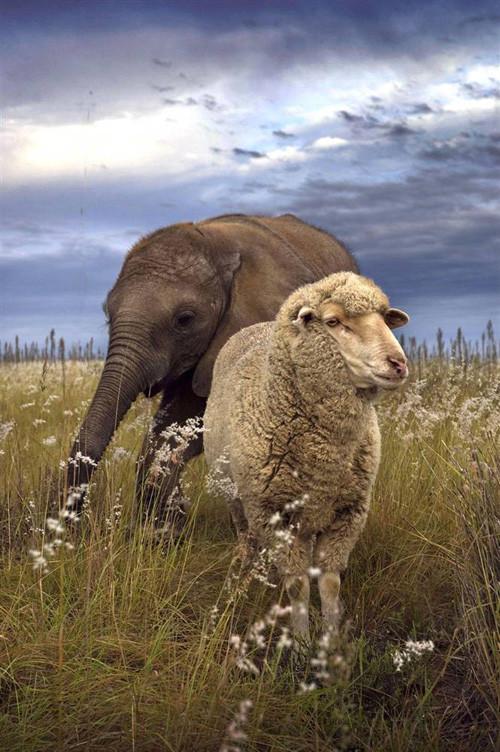 Дружба - она и у животных дружба!. Изображение № 17.