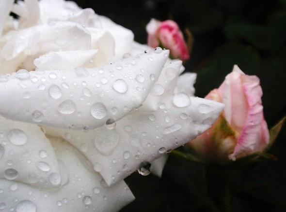 Время цветения. Изображение № 4.