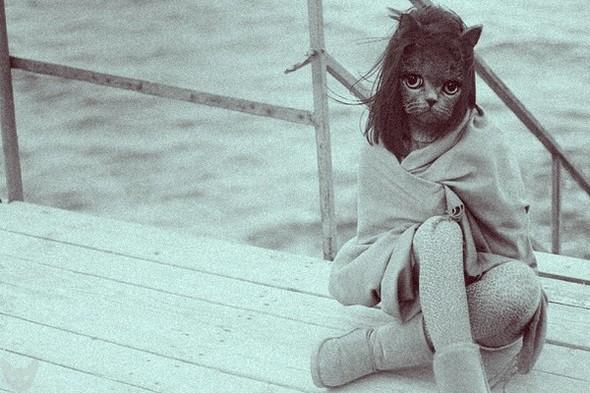 Культ личности кошки. Изображение № 2.