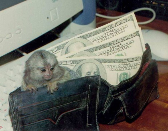 Самая маленькая обезьянка вмире. Изображение № 3.