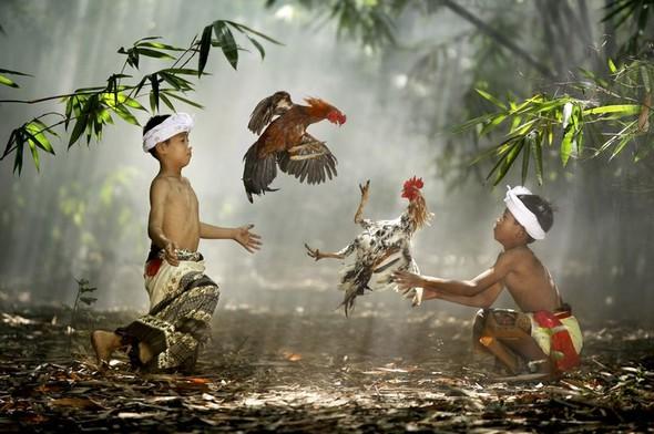 Фотоконкурс National Geographic 2010. Изображение № 35.
