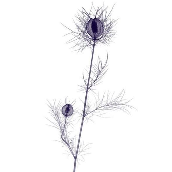 Изображение 18. Цветы под рентгеном.. Изображение № 17.