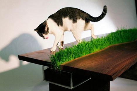 Зеленый стол. Изображение № 3.
