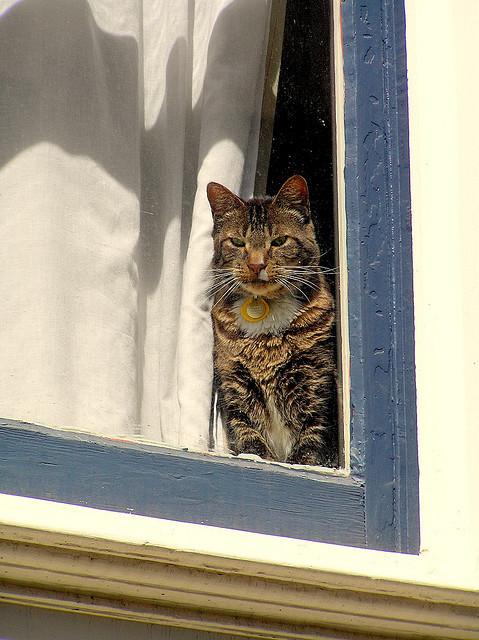 Cat. Window. Изображение № 13.