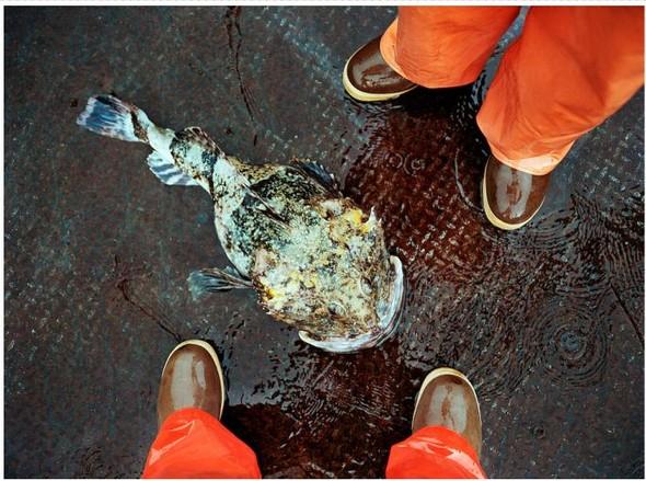Corey Arnold. Морская фотография. Изображение № 6.