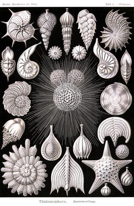 Причудливые формы природы. Изображение № 1.
