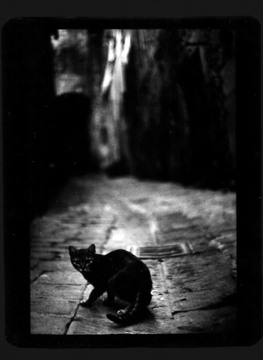 Джакомо Брунелли и«другие» животные. Изображение № 18.