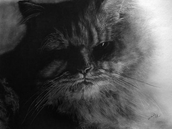 Кошки, люди, карандаш. Paul Lung. Изображение № 6.