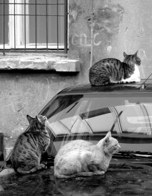 Котики и авто. Изображение № 9.