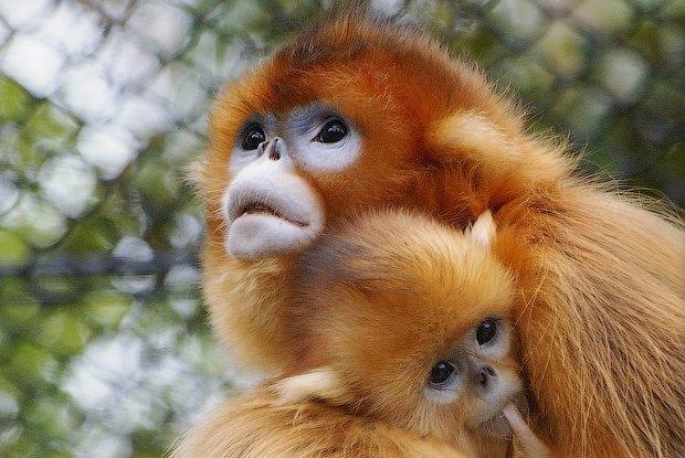 Как учёные находят новых животных: 10 недавно открытых видов. Изображение № 2.